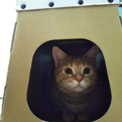 ダンボール製 猫ハウス -使用中1